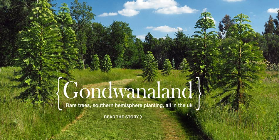 Gondwanaland at marks Hall features southern hemisphere planting
