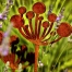 Rusty metal Cow Parsley sculptue for the gaden