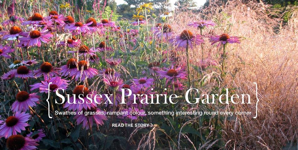 Prairie style planting