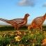Rusted metal pheasant sculpture for the garden